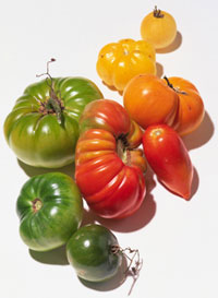 tomato_heirloom300w.jpg