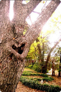 heart_tree1327423453.png