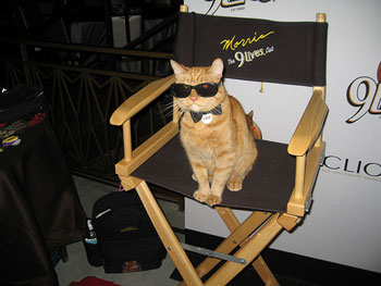 morris-in-directors-chair