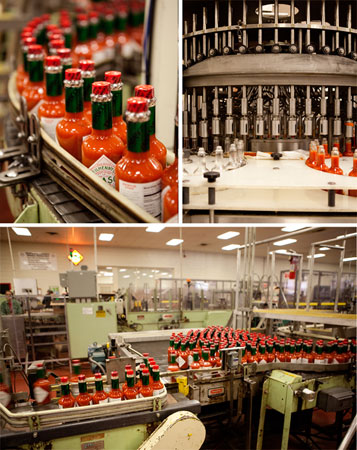 tabasco-production-line-550x