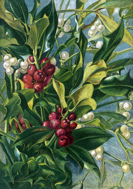 holly-and-mistletoe.jpg